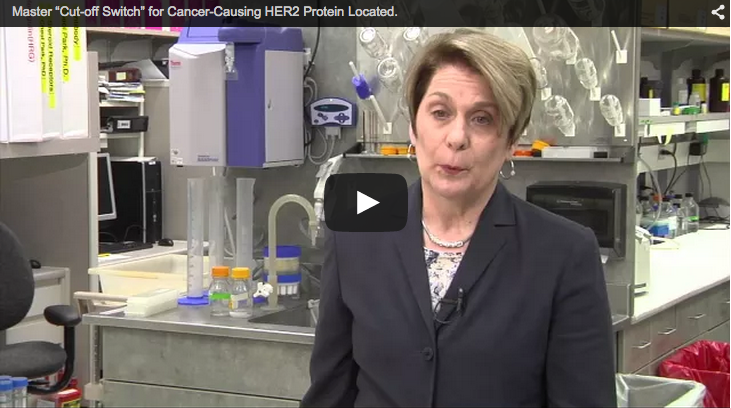 Mayo Clinic-Led Team Identifies Master Switch for Cancer-Causing HER2 Protein