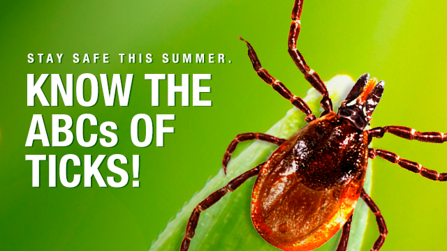 From A to Z, Stay Tick-Free This Summer