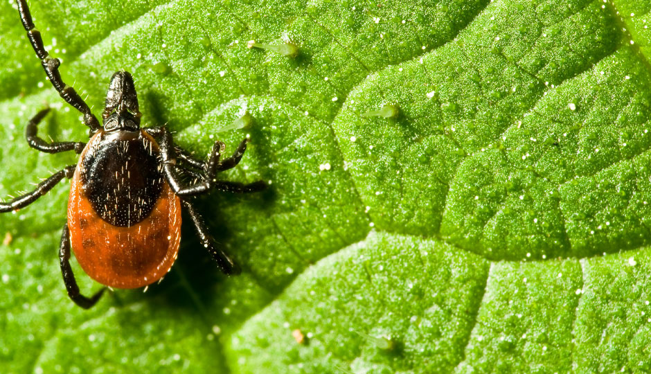 Test Your Knowledge:<br /> Lyme Disease