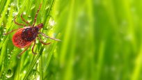 Modified two-tiered testing for Lyme disease